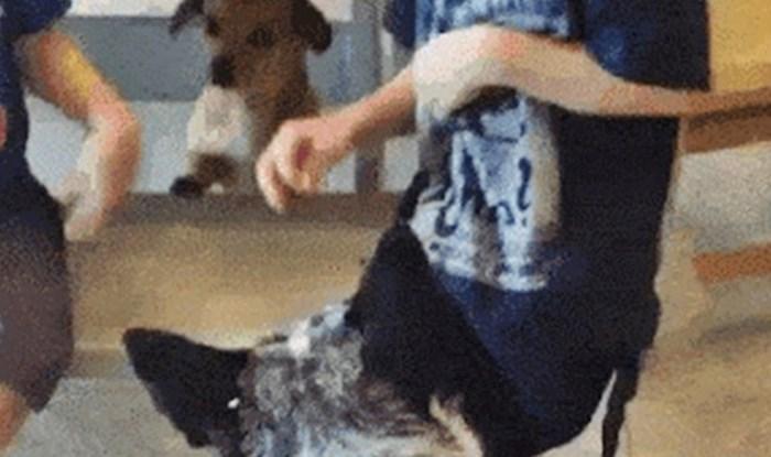 """Psi su smislili genijalan plan: Pogledajte što je jedan radio dok je drugi """"zabavljao"""" djecu"""