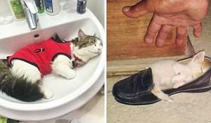 15 smiješnih mačaka koje su zaspale na potpuno neprimjerenim mjestima