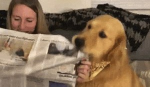 Žena je htjela u miru čitati novine, nasmijat će vas reakcija njenog psa