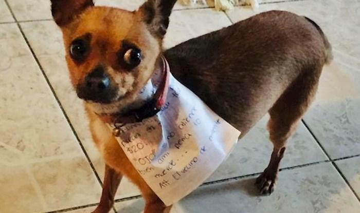 Lik iz karantene poslao je psa da mu nabavi grickalice, evo kako je to završilo