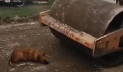 Ovom psu se približavala velika opasnost, pogledajte kako je to završilo