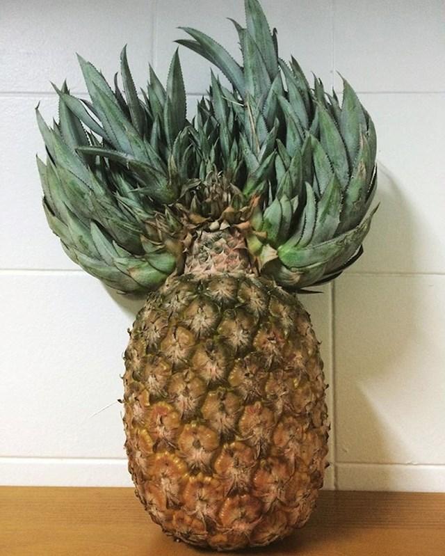 A počešljani ananas?