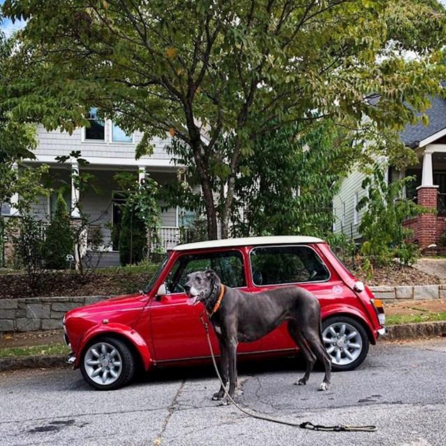Kujica Bella u usporedbi s Mini automobilom