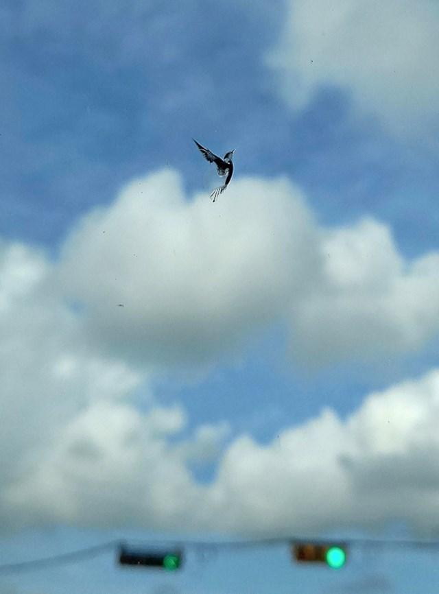 Ne, ovo nije ptica. Riječ je o pukotini na vjetrobranskom staklu.