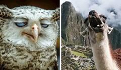 25 smiiješnih slika životinja koje nisu pretjerano fotogenične