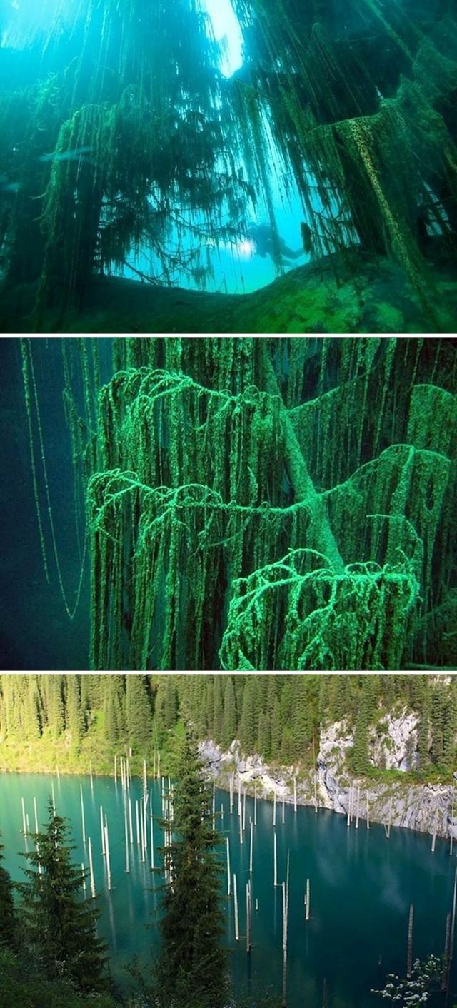 Vjerovali ili ne, i podvodne šume postoje.
