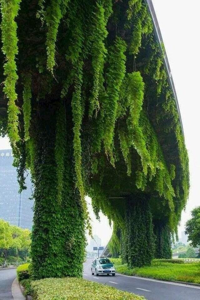 Biljke na ovom nadvožnjaku izgledaju kao drveće koje raste u suprotnom smjeru.