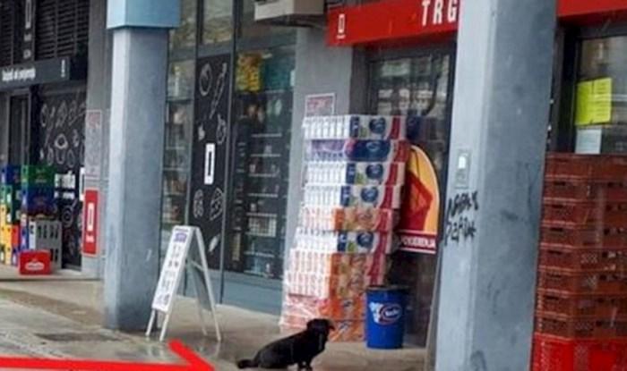 Zbog koronavirusa se i psi drže sigurnosnog razmaka, pogledajte što je netko slikao