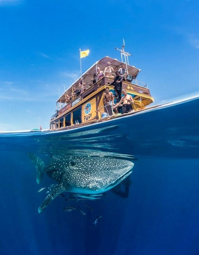 """""""Prijatelj je htio napraviti podvodnu fotku dok smo bili u Tajlandu, no nije očekivao da će ovo naći ispod brodića."""""""