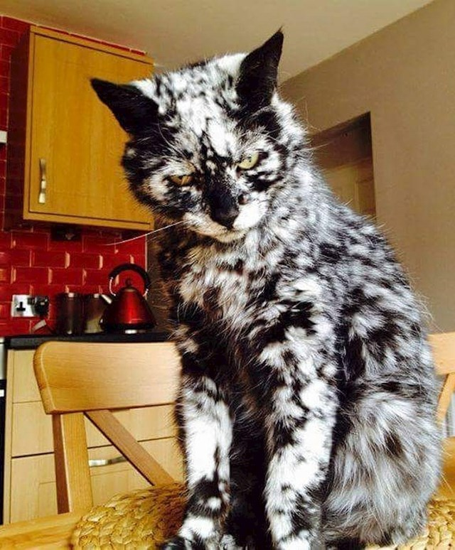 Čudna crno-bijela mica maca