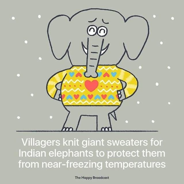 Seljani u Indiji izrađuju goleme džempere slonovima, kako bi ih zaštitili od niskih temperatura.