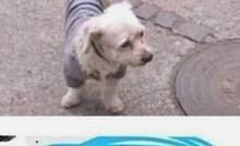 Žena je na Facebooku objavila sliku izgubljenog psa, ovakav odgovor nije očekivala