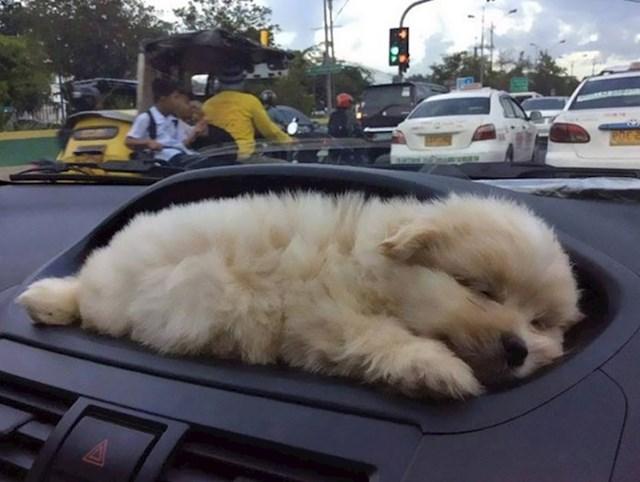 """""""Kupio sam auto. Ima držač psića."""""""