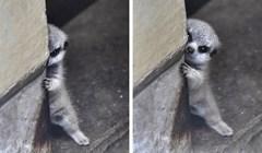 20 slatkih životinja koje bismo najradije odmah čvrsto zagrlili