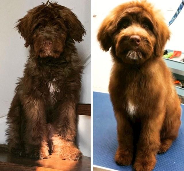 """""""Ovo je naš pas prije i nakon svog prvog posjeta frizeru za kućne ljubimce!"""""""
