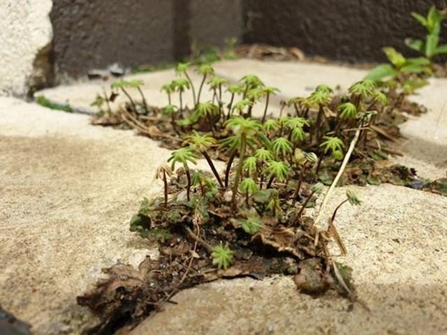 Ove sitne biljčice na uvećanoj fotografiji izgledaju kao oaza usred pustinje.