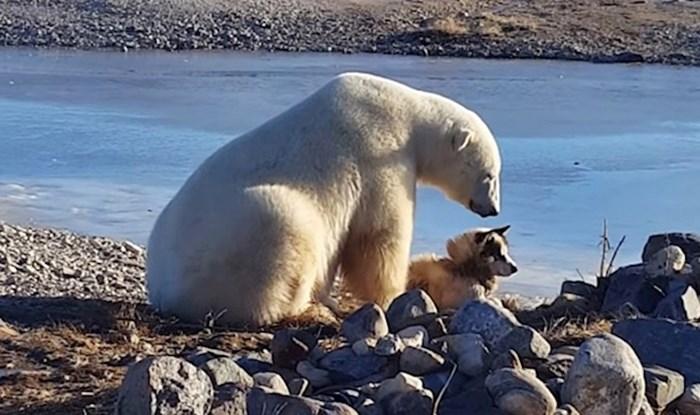 VIDEO Polarni medvjed se približio psu i raznježio zabrinute vlasnike