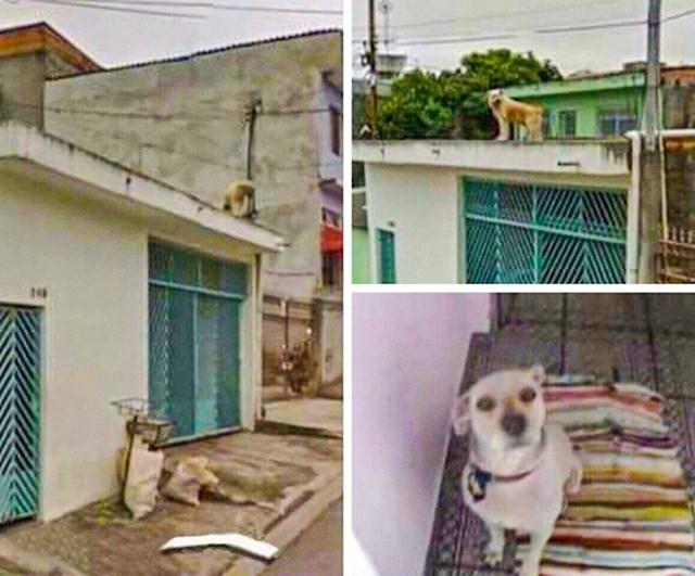 """""""Moj pas je preminuo prije sedam godina, ali svaki put kad otvorim Google maps on je još tamo, na krovu. Nedostaje mi."""""""
