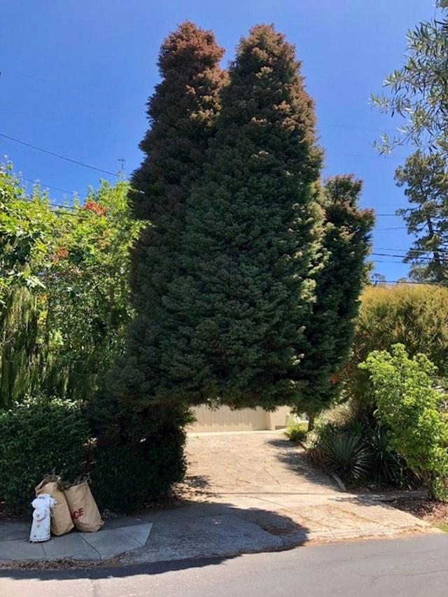 """""""Ovo drvo izgleda kao da prkosi gravitaciji!"""""""
