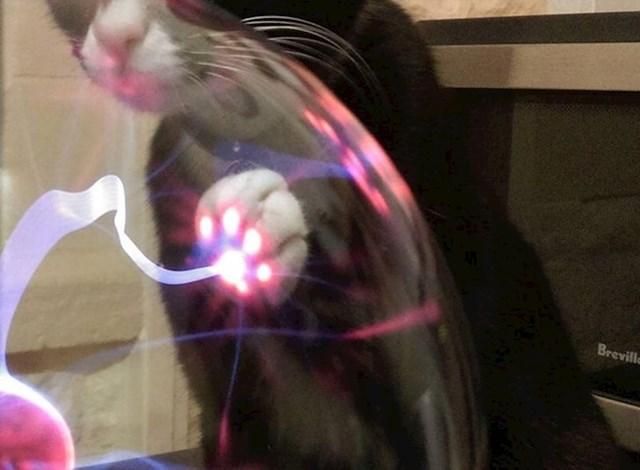 Evo što se dogodi kad mačka dotakne plazma kuglu.