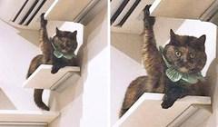 15 mačaka koje će učiniti sve kako bi privukle pažnju svojih vlasnika
