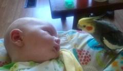 Beba je bila na rubu sna, a onda joj je prišla papiga. Mama je snimila čudesan trenutak