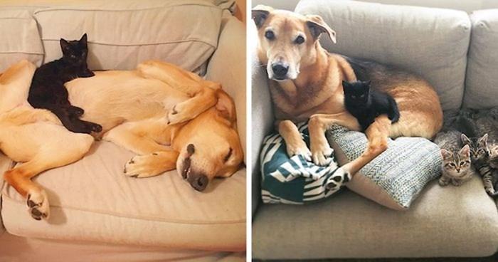 Sklonište za napuštene mačiće ima psa pomoćnika koji brine o svojim malim prijateljima