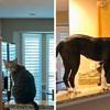 Udomljeni pas je sebi umislio da je mačka pa je počeo raditi čudne stvari po kući