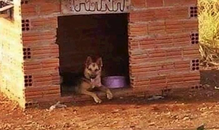 Kako bi ga zaštitili od vrućine, obitelj je psu napravila kućicu sa zanimljivim dodatkom