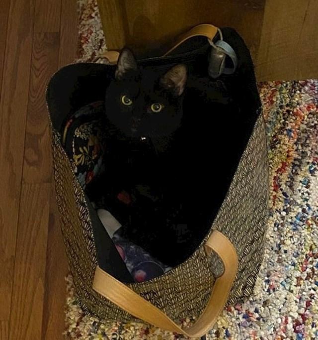 """""""Nisam samo tako mogla ići na posao. Morala sam prvo nagovoriti mačku da izađe iz moje torbe."""""""