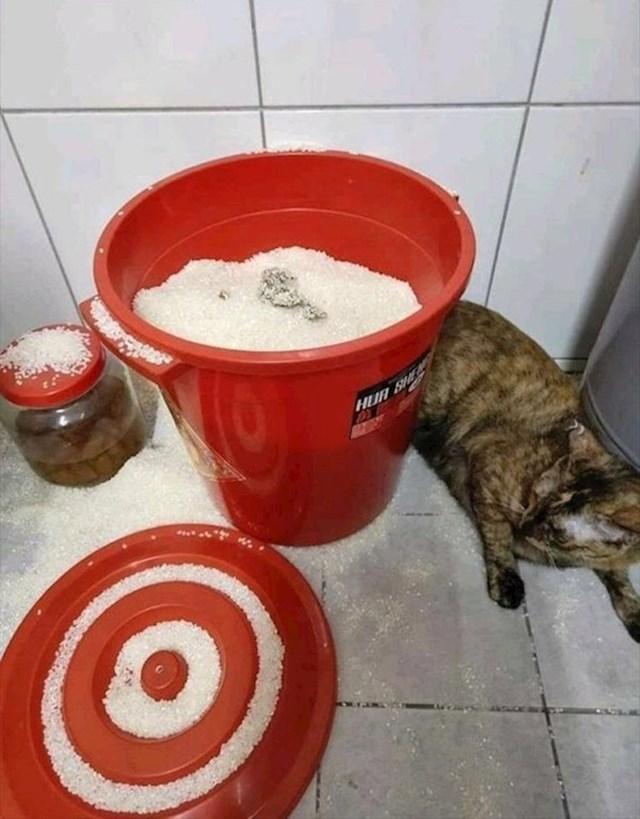 """""""Mačka je našla naše zalihe riže. Mislila je da je pijesak."""""""