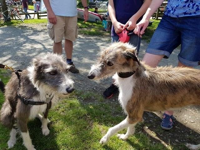 """""""Bili smo na godišnjem odmoru i naš pas je sasvim slučajno upoznao svog brata. Saznali smo da su vlasnici drugog psa nabavili svog ljubimca od istog uzgajivača, iako svatko od nas živi u različitim gradovima u Velikoj Britaniji."""""""