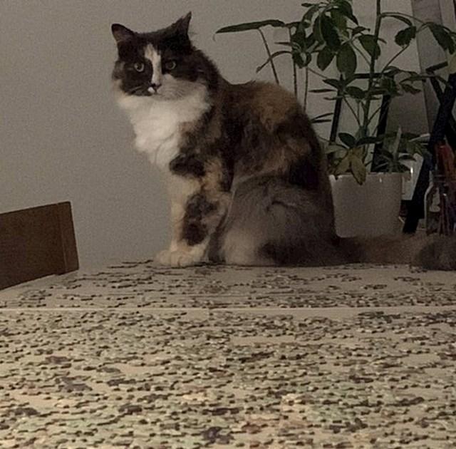 """""""Slagao sam puzzle, a onda je došla mačka i sve mi pomiješala."""""""