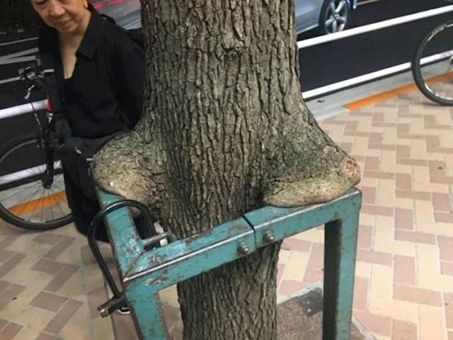 """""""Ovo drvo u Tokiju izgleda kao da je naslonilo ruke na ogradu kako bi se odmorilo."""""""