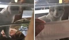 Mački je pokazala poruku na papiru i svijetu dokazala da njena ljubimica zna čitati