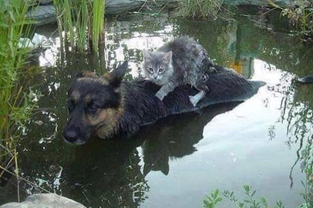 Ovaj pas je dao sve od sebe da spasi mačku.