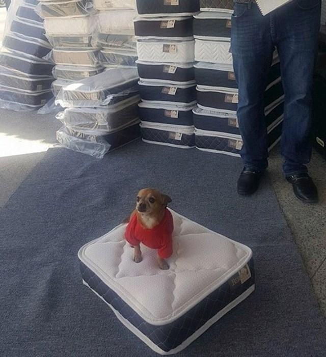 Ovdje svaka osoba koja kupi madrac za krevet, dobije i mini-madrac za kućnog ljubimca!