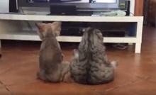 VIDEO Vlasnica ušla u sobu pa ugledala zanimljiv prizor, pogledajte što su pas i mačka radili