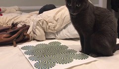 """VIDEO Svojoj mački su pokazali poznatu optičku varku s """"rotirajućim"""" krugovima, evo kako je reagirala"""