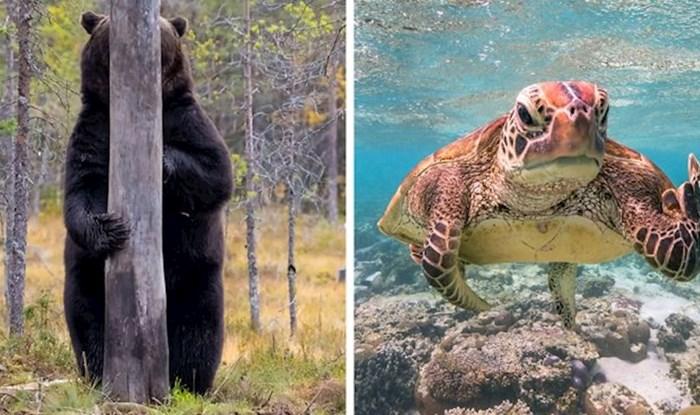 Objavljeni su finalisti Comedy Wildlife foto natjecanja, ove životinje će vas sigurno nasmijati