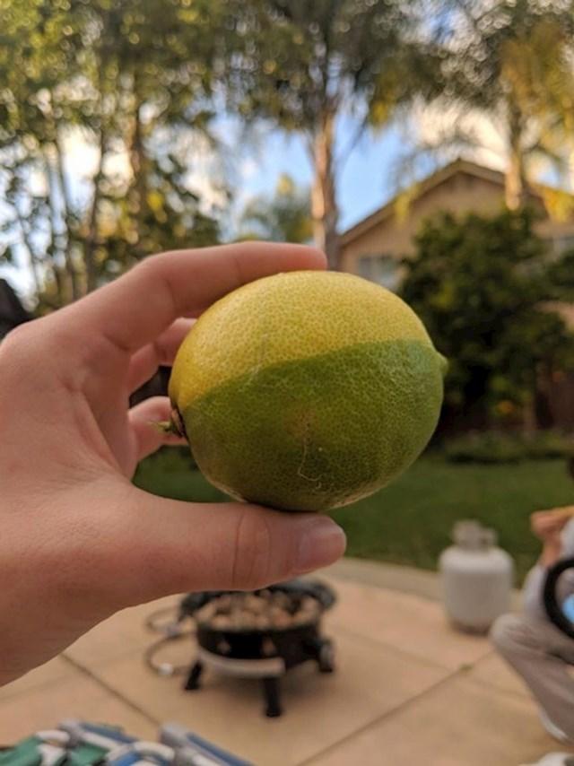 """""""Moj prijatelj ima drvo limuna u dvorištu, pogledajte kakav su limun našli."""""""