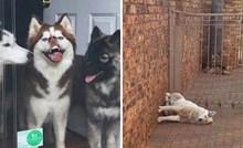 """Vlasnici su podijelili najsmješnije fotke """"pasa s kojima nešto nije u redu"""""""