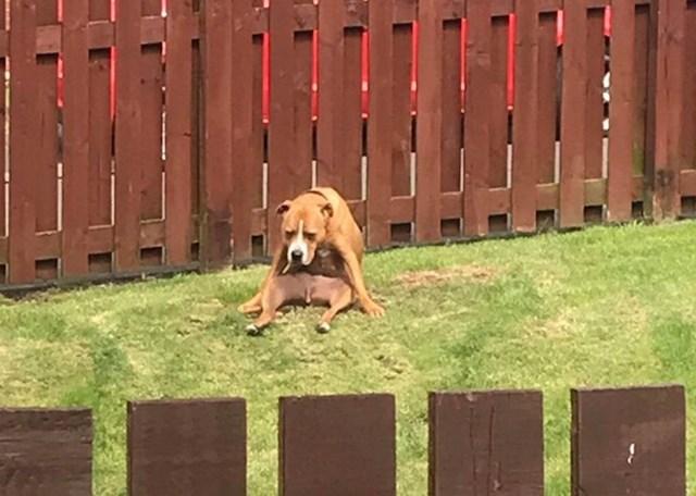 """""""Izašao sam van i vidio susjedovog psa u jako čudnoj pozi..."""""""