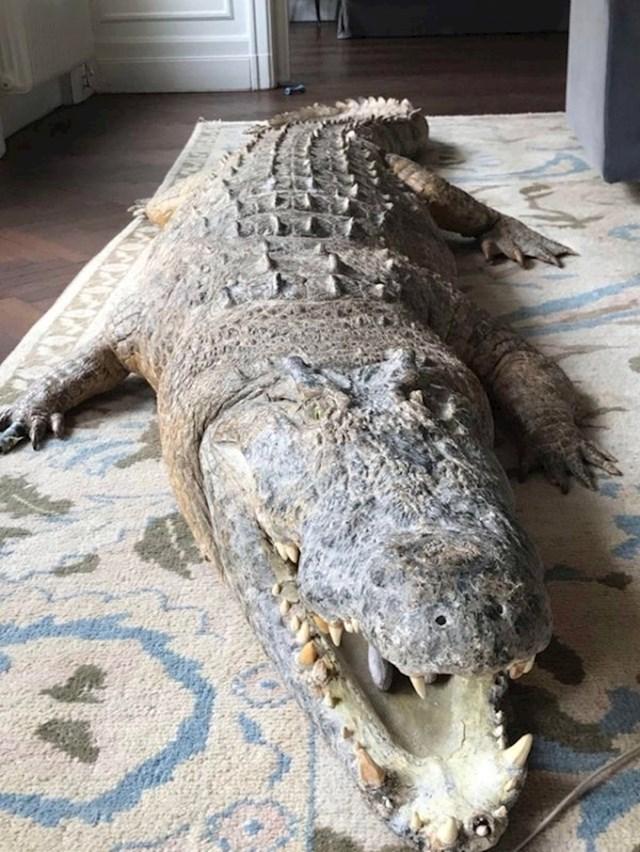"""""""Ušli smo u svoj Airbnb stan i našli... prepariranog krokodila."""""""