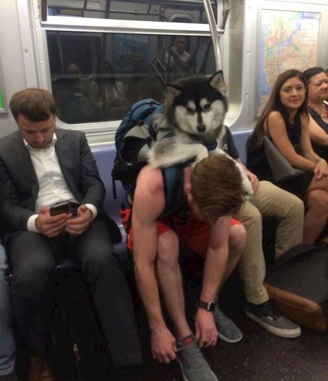 U New Yorku su u metrou zabranjeni svi psi koji ne mogu stati u torbu. Zbog toga ovaj lik nosi svog ljubimca ma leđima.
