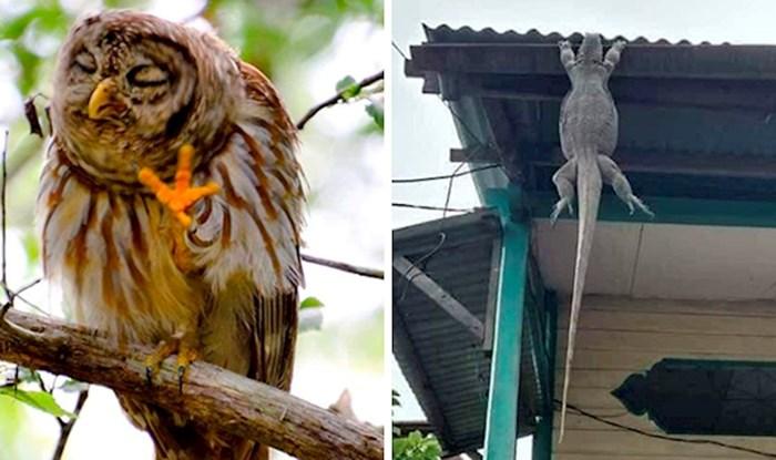 Ova Facebook grupa skuplja najčudnije fotografije sa životinjama, primjeri su urnebesni