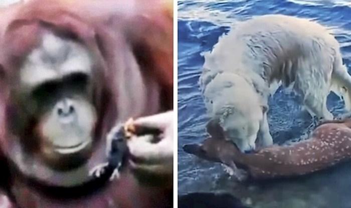 Video koji će vam uljepšati dan: Što se dogodi kada životinja ugleda drugu životinju u nevolji