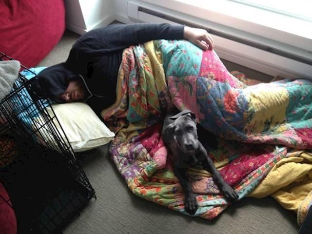 """""""Zabranila sam dečku da dovodi psa u krevet pa je učinio ovo..."""""""