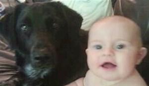 Pas se počeo čudno ponašati kraj bebe, roditelji su otkrili strašan razlog