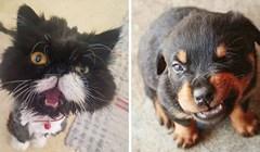 15 životinja koje su pokušale izgledati opasno, no svi su ih na internetu ismijali